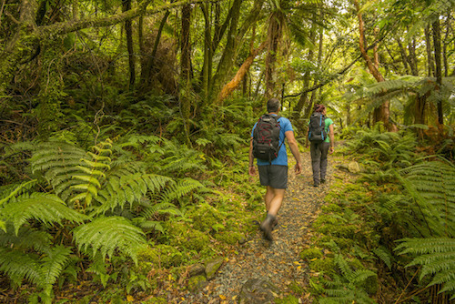 Arthur Valley Milford Track Ultimate Hikes